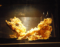 Gold Nugget Mriposa photo