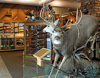 Scheels Sporting Deer Hunting photo